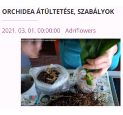 orchidea átültetés