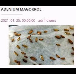 adenium magok