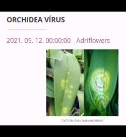 orchidea vírus