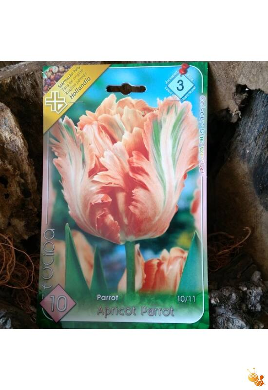Tulipán hagyma Apricot-Parrot